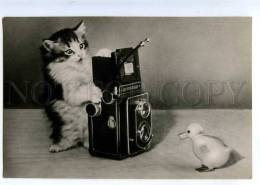 214670 RUSSIA Kitten With Camera Photo By Erofeev Old Photo - Chats