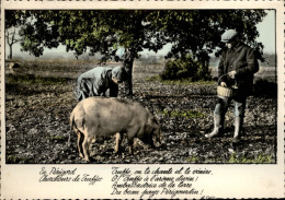24 - EN PERIGORD - Chercheur De Truffe - Cochon - France