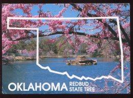 CPM Etats Unis Oklahoma Redbud State Tree - Etats-Unis