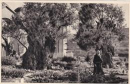 JERUSALEM - INSIDE THE GARDEN OF GETHSEMANE - Palestine