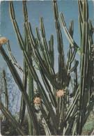 Reunion 58014 Cactus Posted In 1960 - Reunión