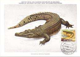 ANGOLA MAXIMUN POST CARD  LUANDA CROCODILE 1954   (SET160038) - Angola