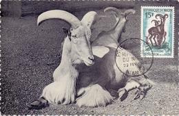 NIGER PROTECTION FAUNE  JARDIN ZOOLOGIQUE D'ANVERS 1960 (SET160049) - Niger