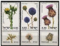 Israele/Israel: Cardi Diversi, Chardons Différents, Thistles Different - Vegetazione