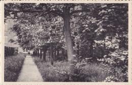 HERK-DE-STAD : Pensionnat Des Ursulines - Le Bosquet - Herk-de-Stad