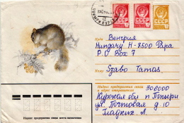 Postal History Cover: Soviet Union Used Postal Stationery With Squirrel - Knaagdieren