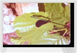 EA166    CARTE ROUMAINE A PUCE    FLEUR - Rumania