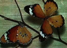 Carte Postale -    Papillons Exotiques -  Danais Chrysippus -    Edition Yvon N° 14 - Farfalle