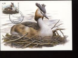 Belgie Buzin Vogels Birds 3538 Maximumkaart Fuut Waremme 15/5/2006 RR - 1985-.. Oiseaux (Buzin)