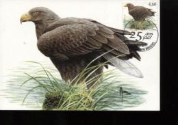 Belgie Buzin Vogels Birds 3871 Maximumkaart  RR Bruxelles 15/4/2010 - 1985-.. Birds (Buzin)