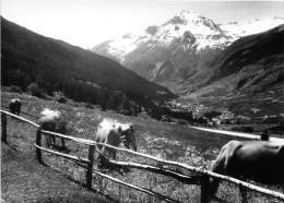 CPSM - Col Du Mont Cenis -  Frontière Franco-Italienne - Lanslebourg Et La Dent Parrachée - Chevaux - Non Classés
