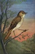 CPM ANIMAL Peinture Le Rossignol  (Ext Guide Des Oiseaux De France) - Birds