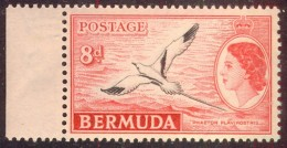 BERMUDA - TROPIC  BIRDS - LILY - **MNH - 1955