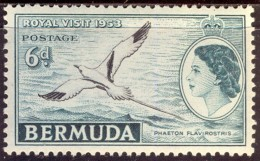 BERMUDA - TROPIC  BIRDS - LILY - **MNH - 1953