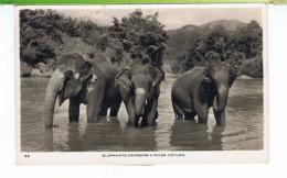 CPSM-SRI-LANKA-1958-3 ELEPHANTS QUI JOUENT DANS UNE RIVIÈRE A CEYLAN-VOIR TIMBRE AU DOS- - Sri Lanka (Ceylon)