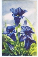 CHIOSTRI  - EDIT BALLERINI & FRATINI 1930s/40s - FLOWER - GENTIAN - N.9017 - Chiostri, Carlo