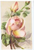 CHIOSTRI  - EDIT BALLERINI & FRATINI 1930s/40s - FLOWER - ROSES - N.9017 ( D ) - Chiostri, Carlo