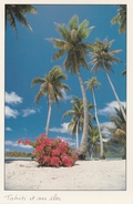 CPM Tahiti Et Ses îles : Bougainvillier En Fleur - Tahiti