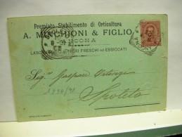 ANCONA   -- A. MENCHIONI E FIGLIO  .. ORTICOLTURA - Ancona