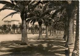CPA-1955-TUNISIE-BIZERTE-AVENUE De La MARNE-La MAISON Des OFFICIERS-BE - Tunisie