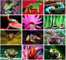 12 Postcards Of Frog Frogs, Postkarte Carte Postale - Autres