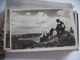 Bulgarije Bulgarien Man With Goats In Mountains - Bulgarije