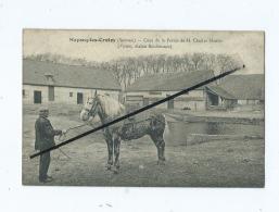 CPA  -  Mayocq Les Crotoy  - Cour De La Ferme De M.Charles Manier  (Vismes étalon Boulonnais  )  Mayoc  -  Cheval - France