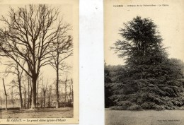 ARBRES Lot 2 Cartes HUISMES Le Cèdre Chateau De La Poitevinière- OBJAT Le Grand Chêne (gloire D´Objat) - Arbres