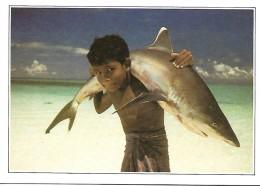 Maldives Islands  Requin à Pointe Blanche - Maldives
