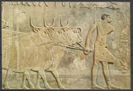 Egypt, Sakkara, Ptah-Hotep Mastaba, Beautiful Relief Of Cattle. - Ägypten