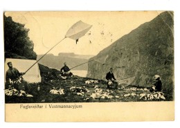 18157   -   Fuglaveidar I Vestmannaeyjum - Islande