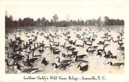 USA - Ansonville - Lockhart Gaddy's Wild Goose Refuge (oies) (R. P.) - Etats-Unis