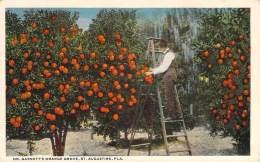USA - St. Augustine - Dr. Garnett's Orange Grove - St Augustine