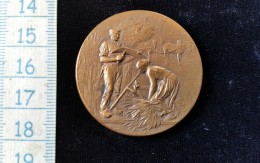 Médaille, Jeton Bronze, Agriculture Pontarlier, 1901 - Francia