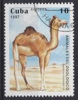 Cuba  1997  Zoo Animals (o) Camels - Cuba