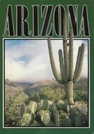 Saguaro Cactus In The Arizona Desert - Cactus
