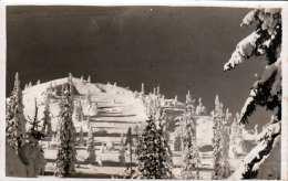 Prijatelj Prirode Sarajevo (Jugoslawien) - Fotokarte 2 Fach Frankiert, Gel.1935 - Jugoslawien