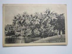 COCOANUT PALMS TRINIDAD - PORT OF SPAIN 1931 - Trinidad