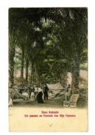 18204   -   Novo Redondo - Sumbe   -   Um Passeio Na Fazenda Dos Srs Patricios - Angola