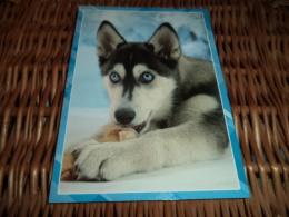 Hund Dog Chien Siberian Husky Postcard,Postkarte - Chiens