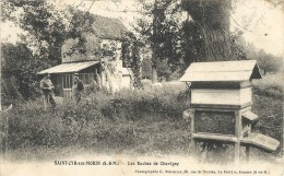 SAINT CYR SUR MORIN . RUCHES DE CHAVIGNY - Autres Communes