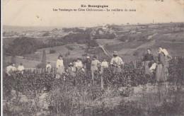 CARTE POSTALE   Les Vendanges En Côtes Châlonnaises.La Cueillette Du Raisin 71 - Francia