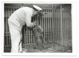 TRÈS RARE - Gardien Du Zoo De Vincennes Donnant Le Biberon à Un Ourson - Début Années 40 - Photo 13x18 Argentique - Ours