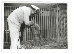 TRÈS RARE - Gardien Du Zoo De Vincennes Donnant Le Biberon à Un Ourson - Début Années 40 - Photo 13x18 Argentique - Altri