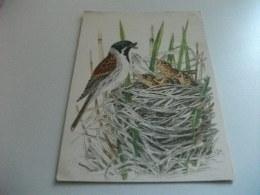UCCELLO BIRD IL NIDO ILLUSTRATORE VEDI SIGLA P.R. - Uccelli