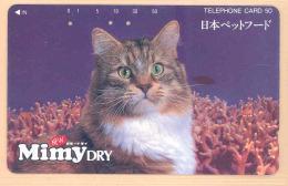 JAPAN Telefonkarte   -110-011- Katze, Cat, Mimy Dry - Cats