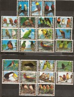 Umm Al-Qiwain Oiseaux Birds Obl - Umm Al-Qiwain