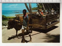 Ox Cart - La Digue, Seychelles - Seychelles