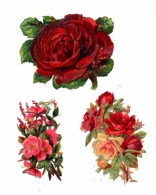 Lot 3 Decoupis Rose - Flowers