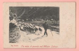 Panorama E Pastore Sul Monte Spluga Cp 1902 - Sondrio